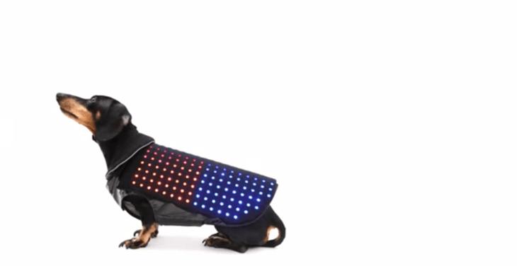 Disco Dog is a new wearable raising cash on Kickstarter.