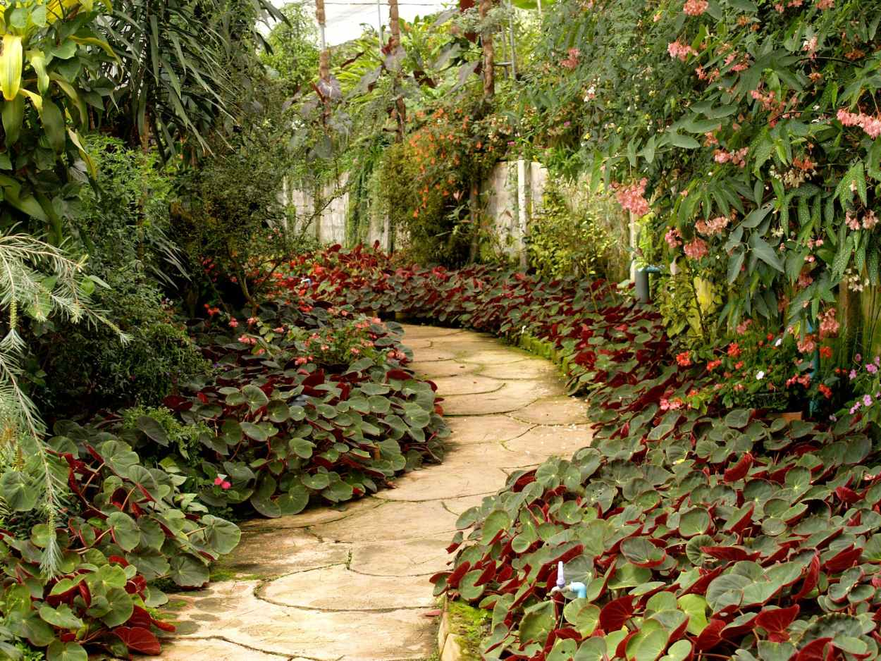 Beautiful Paving Ideas for your HomeGardening Site