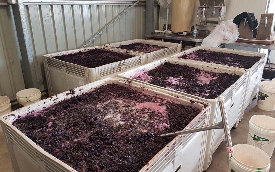 Winemaking 2018: All hands on deck