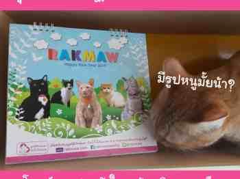 ปฏิทินรักษ์แมว 2562 Rakmaw Calendar 2019