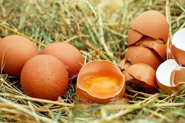 แมวห้ามกิน ไข่ดิบ