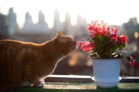 ดอกไม้กับแมว