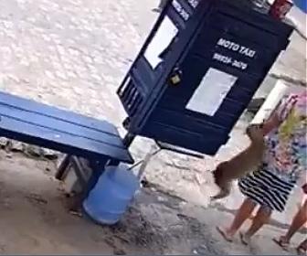 【動画】犬が女性に飛び付きスカートを脱がしてしまう衝撃映像