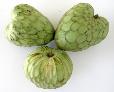 Custard apples are cultivated in Chile