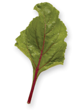Beet leaf on Shockingly Delicious