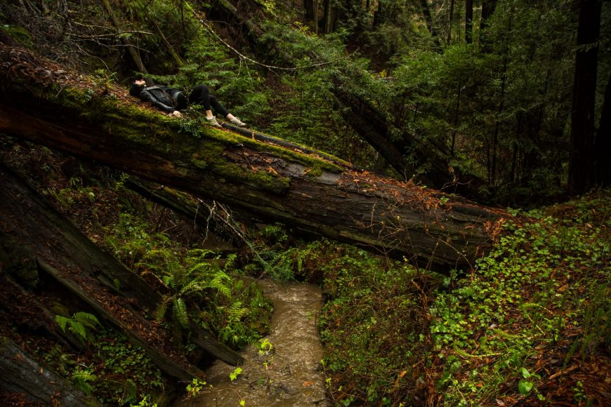 Redwood_Forest_Life_by_Justin_Sullivan