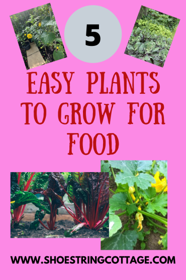 Easy Plants to Grow for Food