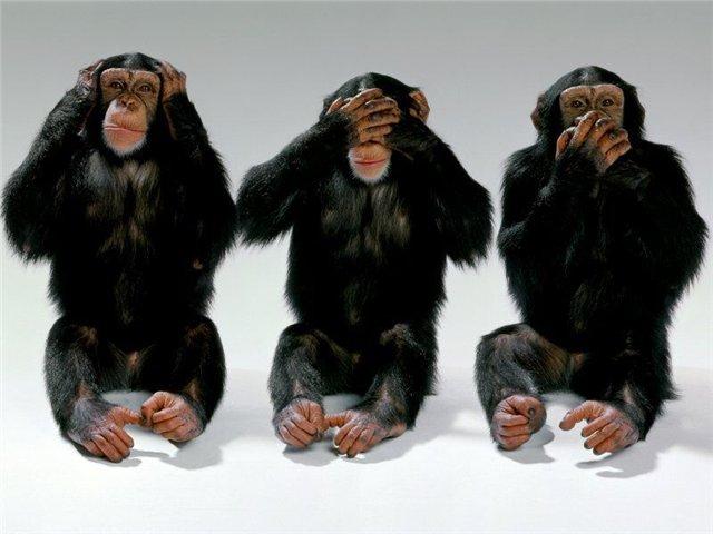 three-monkeys