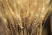 2016穀物相場