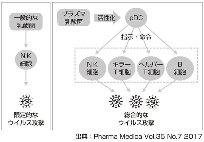プラズマ乳酸菌 キリン ウイルス感染リスク対策