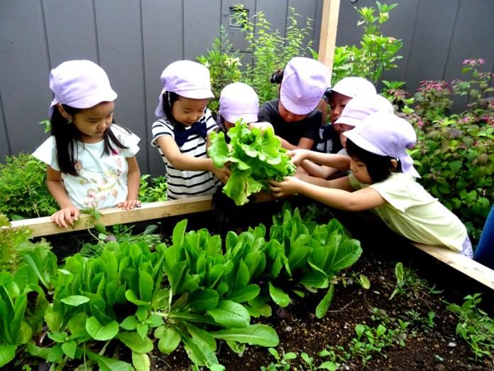 野菜収穫祭 キユーピー 伊藤園 東急不動産は NPO法人アーバンファーマーズクラブ