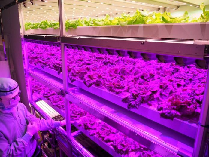 8段に分かれた自動栽培棚。生育段階に応じて光の色を変える(相模原ベジタブルプラント)