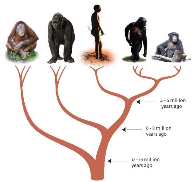 ape-tree.jpg