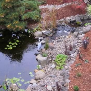 Pond (5)