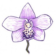 Orchid-Step-by-Step_0003