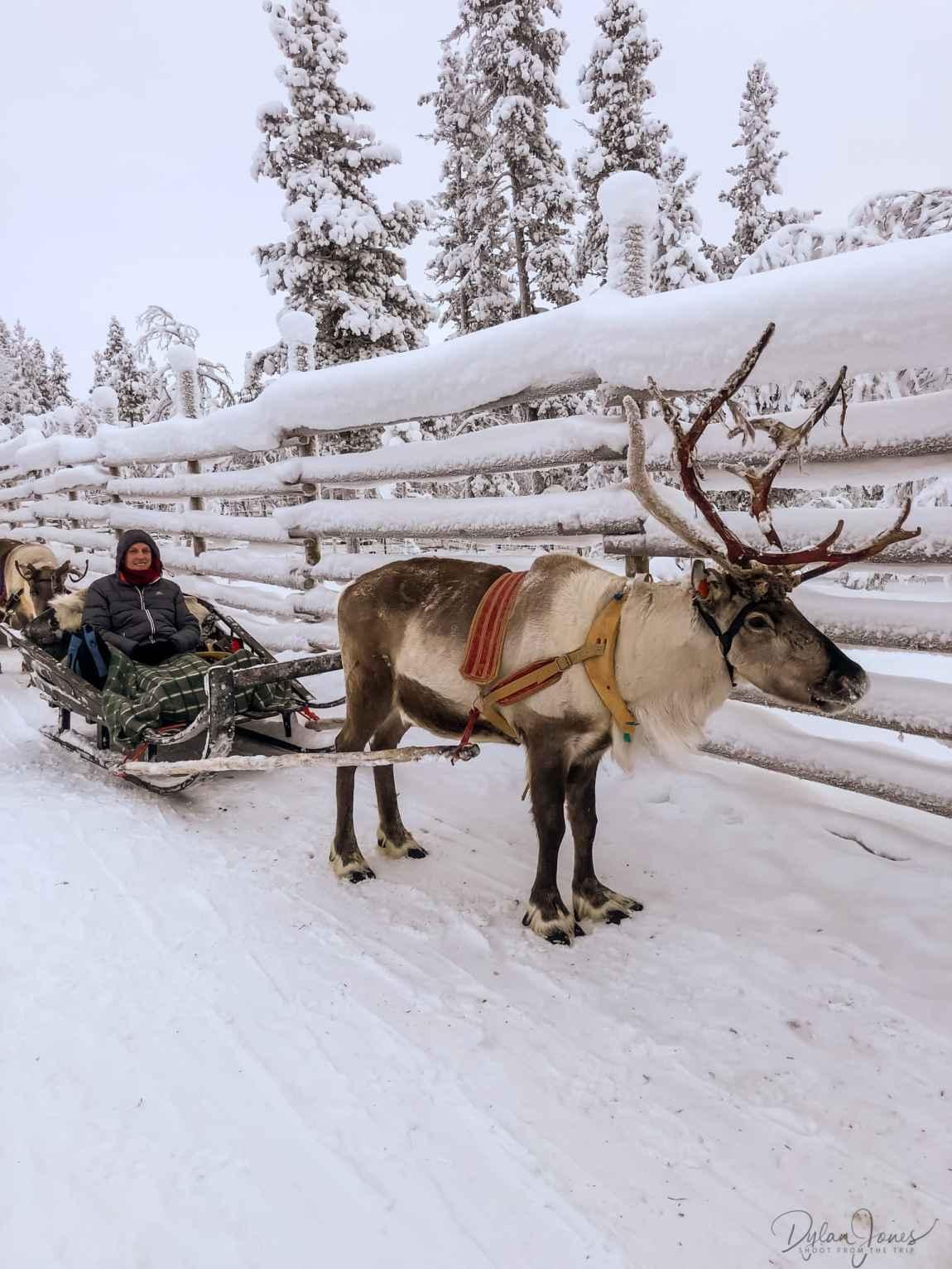 Me and my reindeer friend Saariselkä Lapland