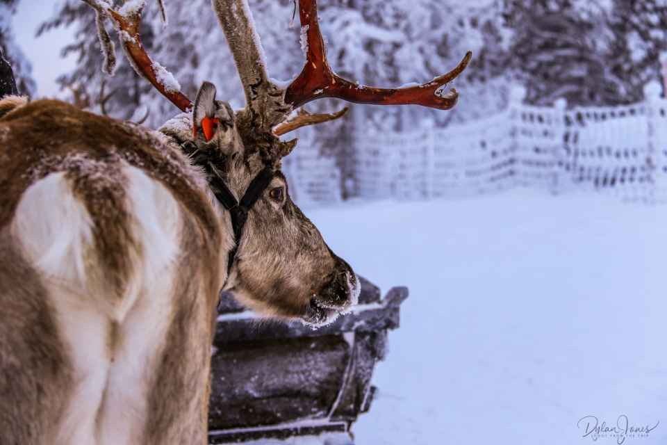 Reindeer Safari at the Northern Lights Village Saariselka