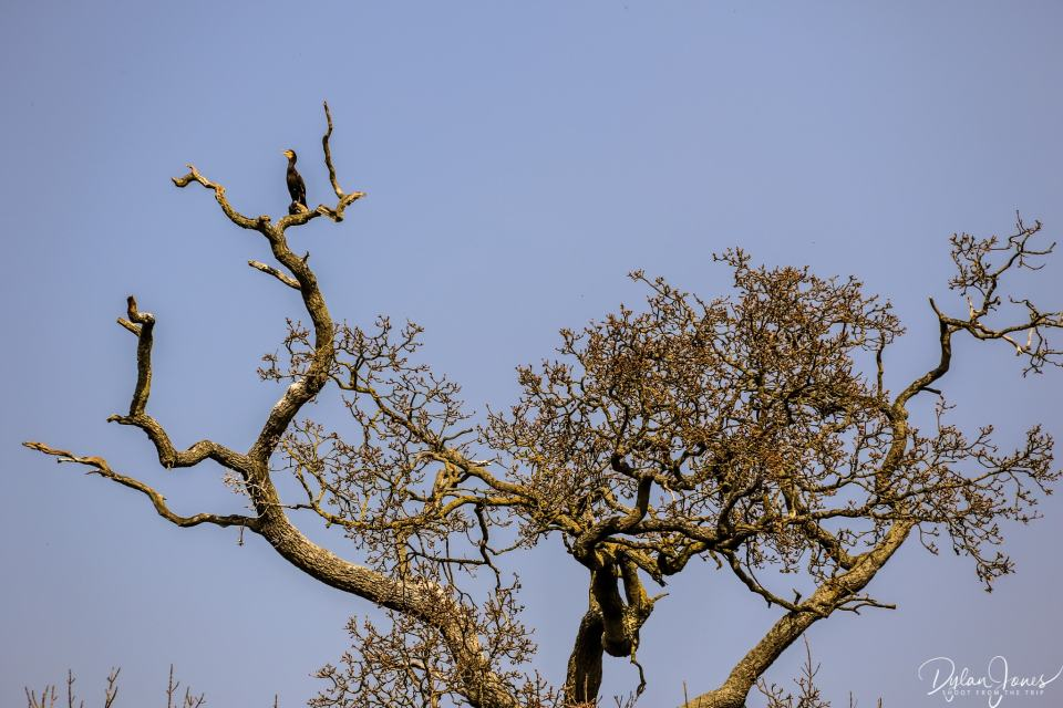 A cormorant perched above the river