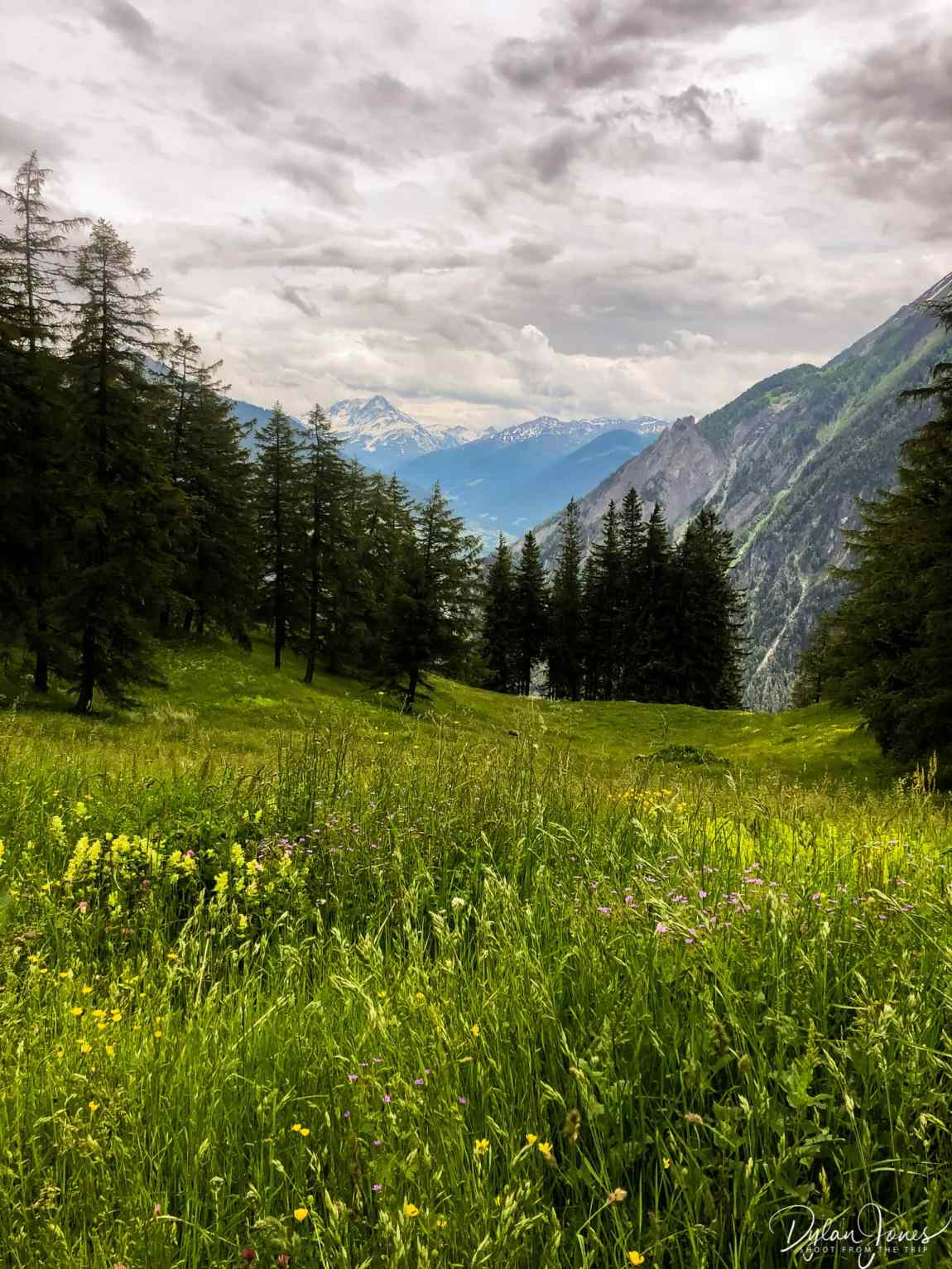 The Col des Planches mountain pasture