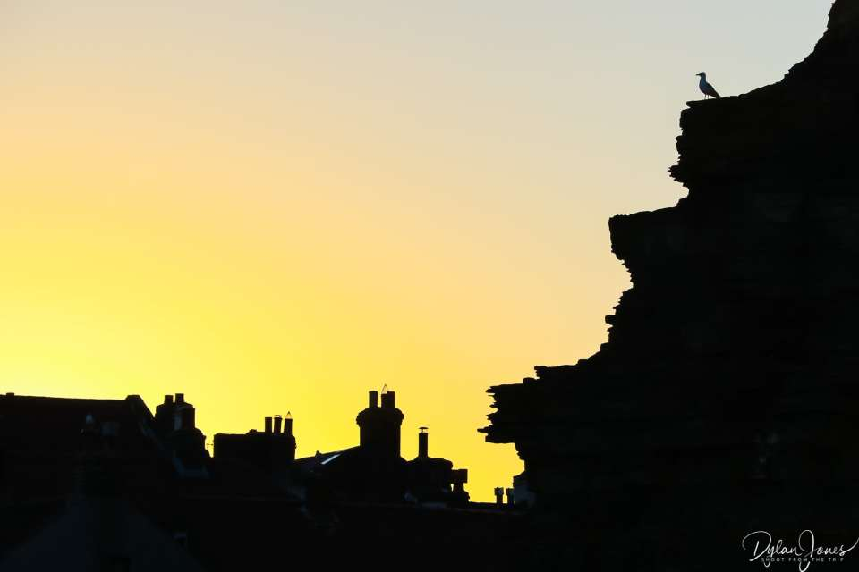 Chimneys, cliffs and seagulls in silhouette