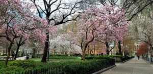Spring in Rittenhouse Square