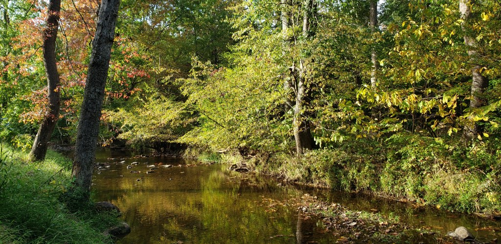 Fall colors in Gainesville, Virginia.