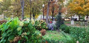 Fall colors in Rittenhouse Square