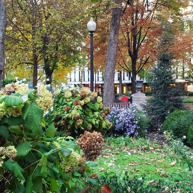 Fall colors in Rittenhouse Square