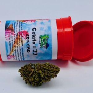 Cannabis legale Gelato #33
