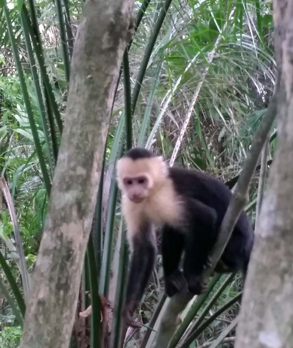 Monkeys in Costa Rica