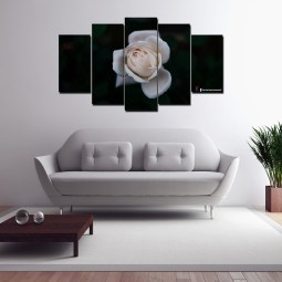 white rose wall canvas