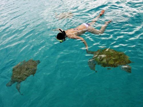 Barbados Swim With Turtles Shipwreck Snorkel And Pirates Cove Beach Excursion Barbados Excursions