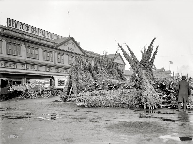 Christmas Tree Market: 1903