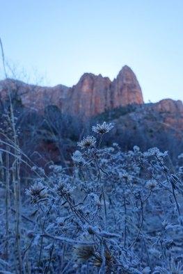 Frost on the La Verkin Creek Trail