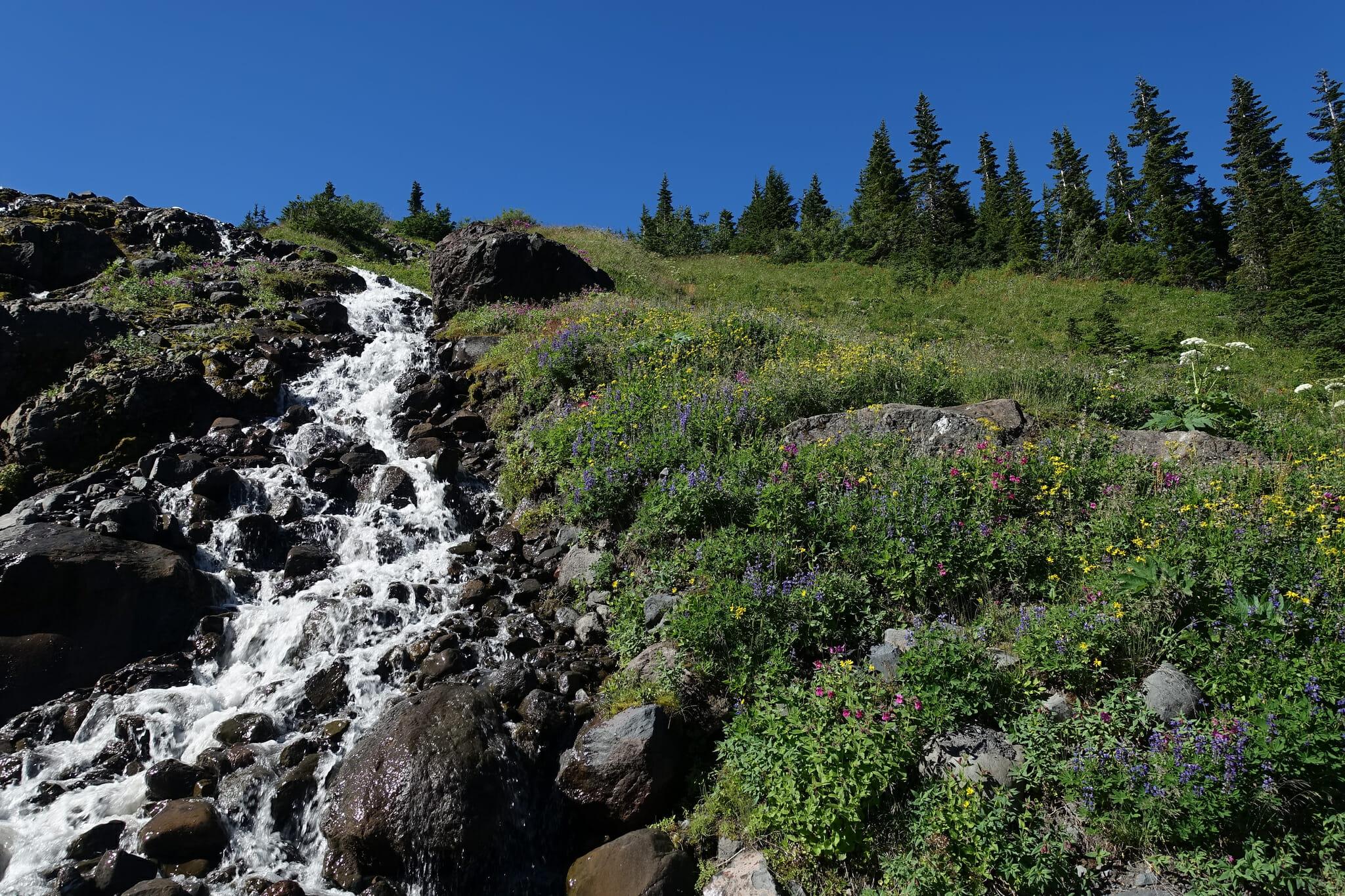 Heliotrope Creek and Wildflowers