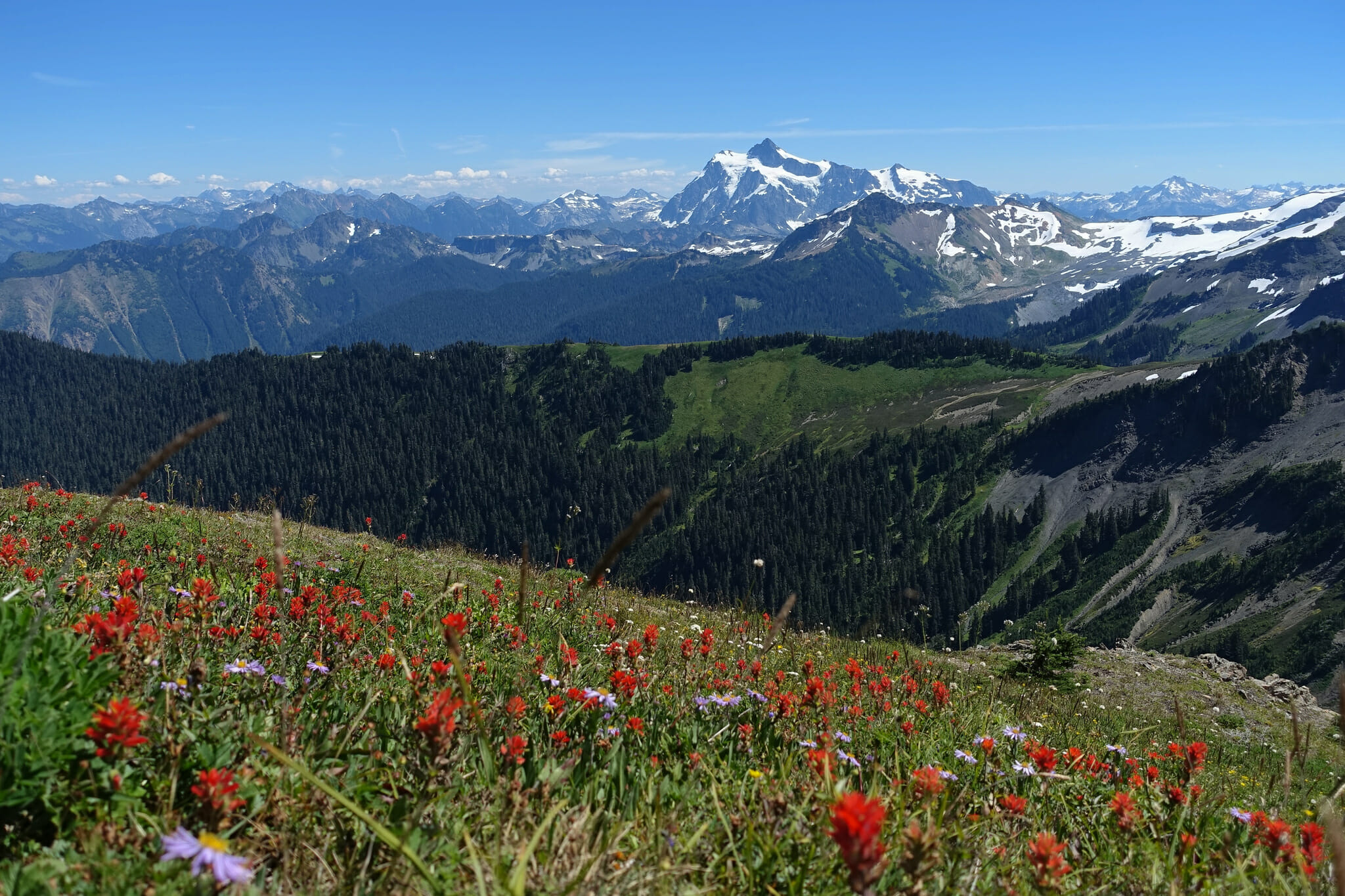 Wildflowers, with Mount Shuksan and other North Cascades peaks in the background.