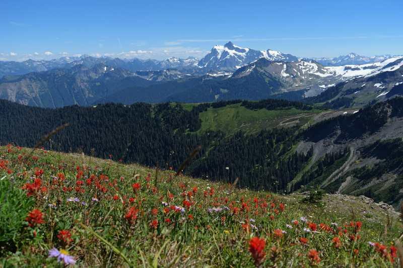 Mount Shuksan and Wildflowers