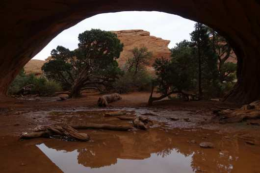 Navajo Arch framing a small pool and tree, Arches National Park