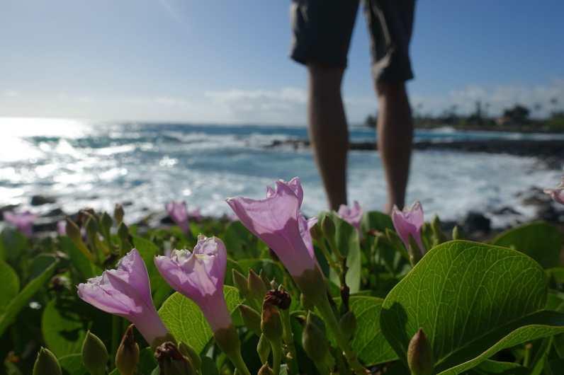 flowers at Poipu Beach