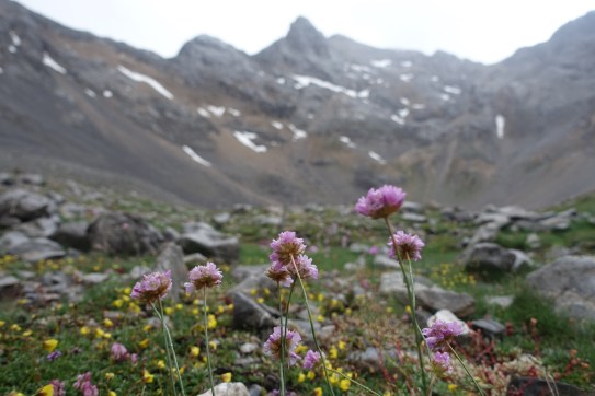 Wet, pink flowers with distant mountains