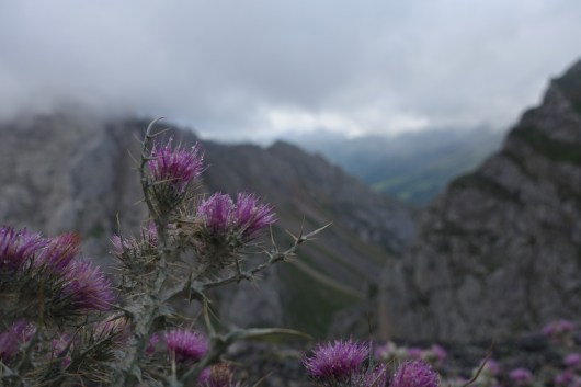 Wet, pink thistle with mountains and clouds in the background
