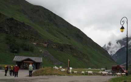 Goats passing through Les Chapieux