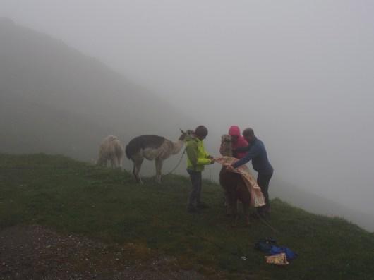 People put blankets on llamas at Refuge de la Croix du Bonhomme