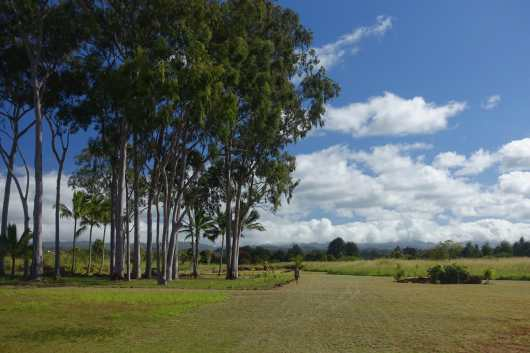 trees and field at the Kukaniloko Birthing Stones, Oahu