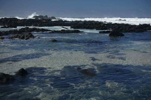 Seal in a tide pool at Ka'ena Point