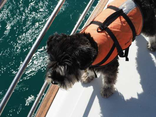 Buster, the dolphin spotting dog.