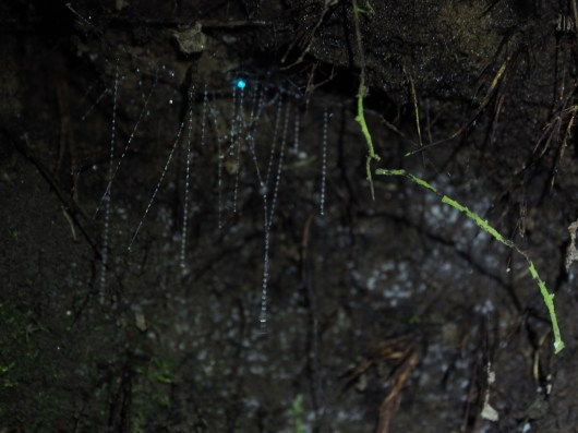Glowworms near Clinton Hut