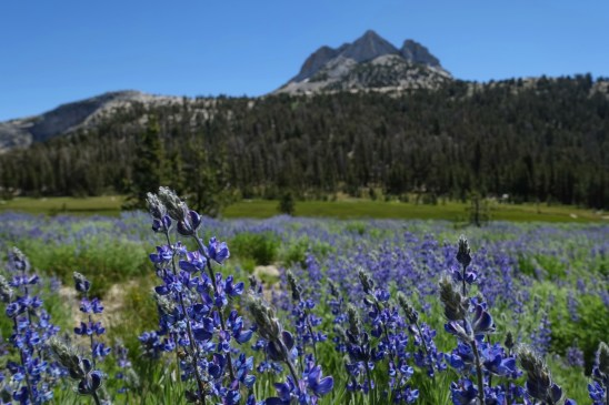 Lupine and Echo Peaks