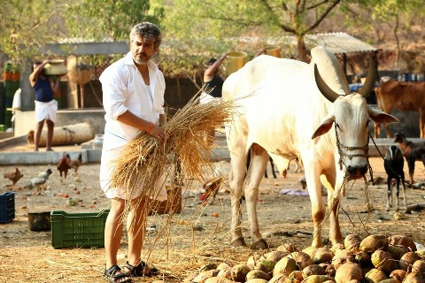ajith in veeram movie-showbibites