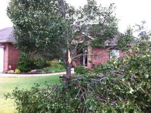 Tree Damage in Edmond, OK